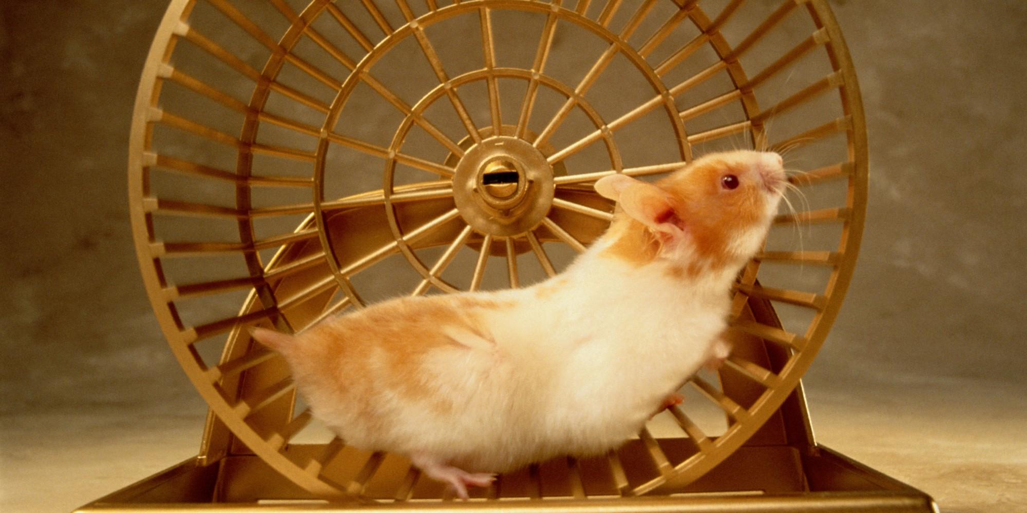 Hamster wheeljpeg