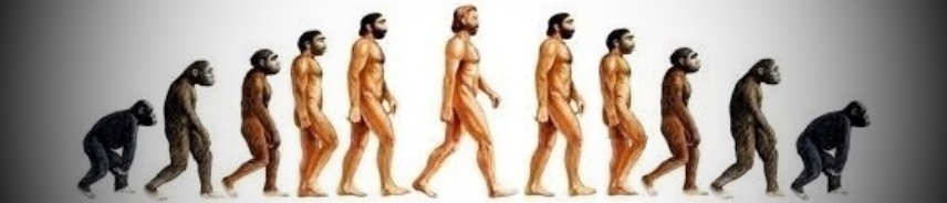 evolutionjpg